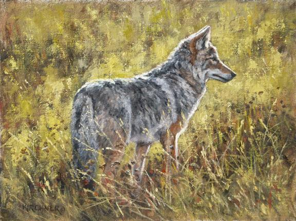 Coyote, Coyote Painting, Nature art, Nature, nature painting, western art, western paintings, western wildlife, western wildlife paintings, Yellowstone  national park coyote, teton national park coyote ,Leslie Kirchner, Leslie Kirchner art