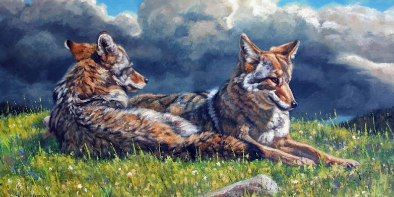 Leslie Kirchner, leslie kirchner artist, wildlife artists, wildlife art, western art, western artist, nature artists, nature artist, nature art, canid canid art, coyote, coyotes, coyote art, coyote artwork, coyote painting, coyote pair