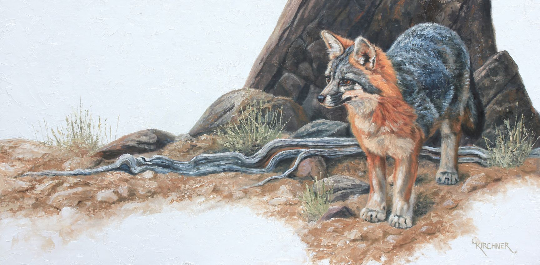 Leslie Kirchner, leslie kirchner art, leslie kirchner artist, western art, wildlife art, nature art, wildlife artist, western artist, nature artist, wild canid, fox, gray fox, greay fox, grey fox art, grey fox painting, gray fox art, gray fox painting
