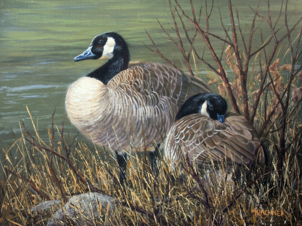 Leslie Kirchner, leslie kirchner art. leslie kirchne artist, nature art, nature artist, wildlife art, wildlife artist, western art, western artist, geese, geese art, geeses painting, canada geese, canada geese painting, canada geese art, canada goose pair, canada goose art, canada goose